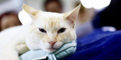 ¿Son los gatos egoístas? estudio revela la verdad sobre los felinos