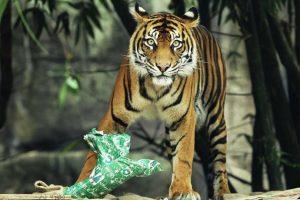El Badaling Safari World ha sido cerrado para dar paso a la investigación de lo ocurrido. Foto:Getty Images. Imagen Por: