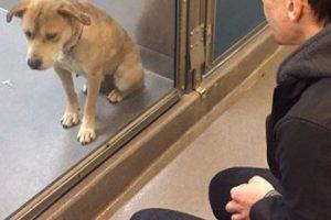La adopción es la mejor ayuda para erradicar el problema de los animales callejeros. Foto:Imgur. Imagen Por: