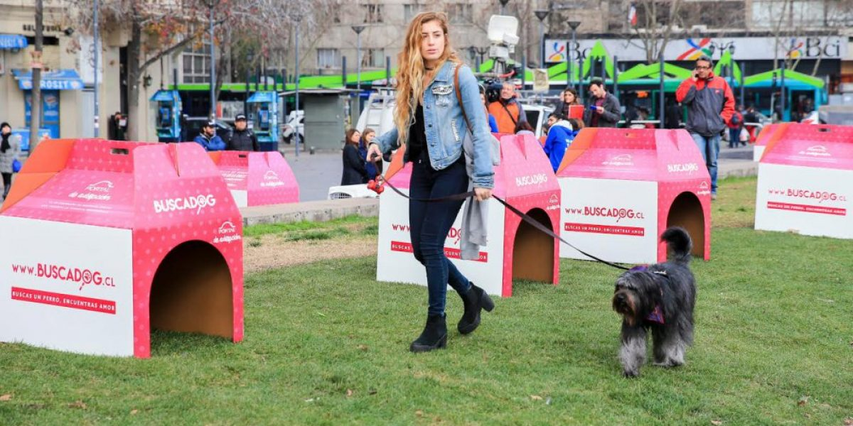 FOTOS: Famosas se unen para promover la adopción de perros callejeros