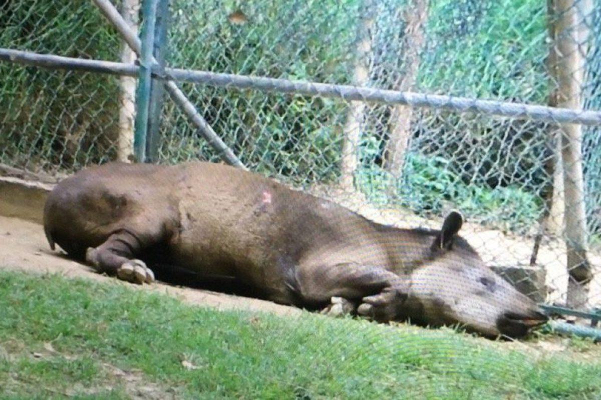 También se reporta la muerte de animales por desnutrición Foto:Facebook.com/marlene.sifontesguevara. Imagen Por: