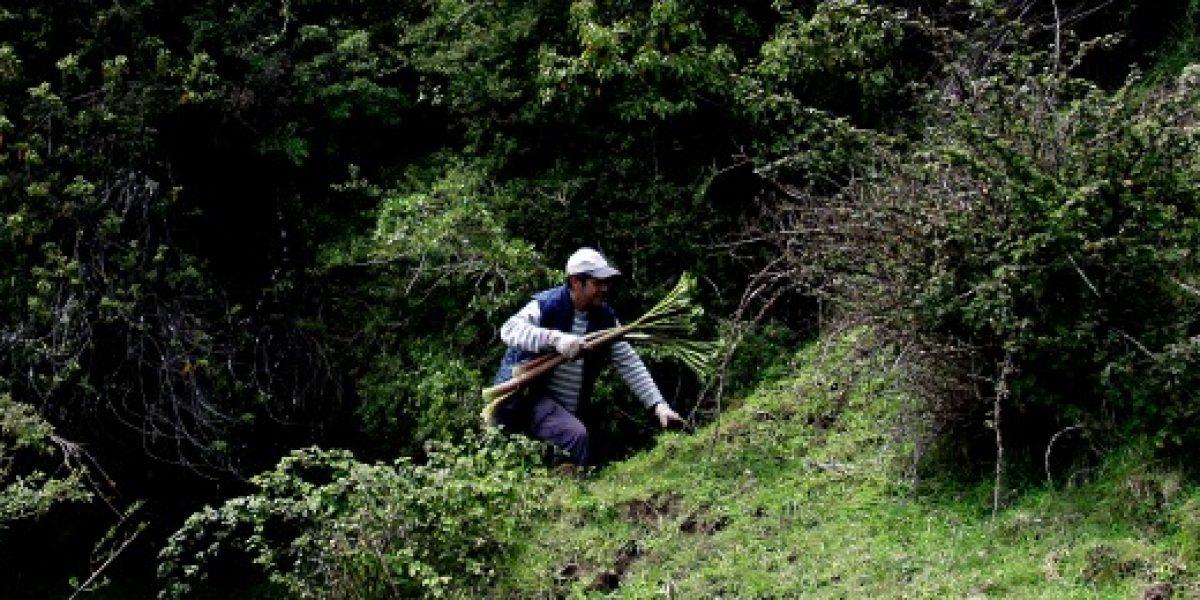 En plan de emergencia crearán 770 empleos en Región del Maule