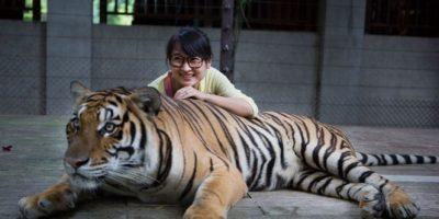 Por esta razón nunca deben tomarse un selfie con un tigre