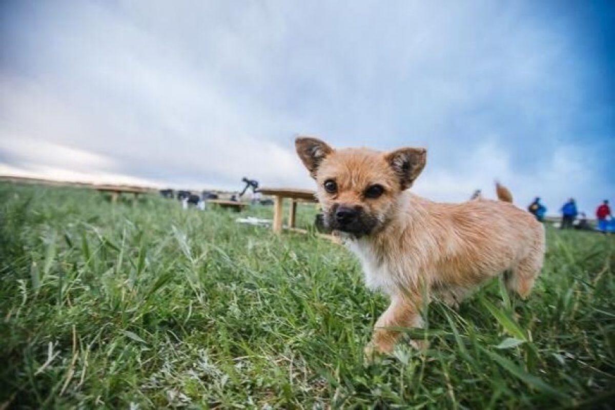 """Y ella es """"Gobi"""" Foto:Crowdfunder.co.uk/bring-gobi-home. Imagen Por:"""