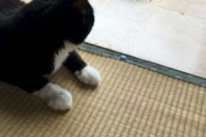 En Japón aseguran que las mascotas… Foto:Twitter. Imagen Por: