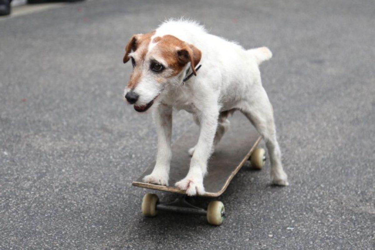 3. Esterilizar a los perros y gatos Foto:Getty Images. Imagen Por: