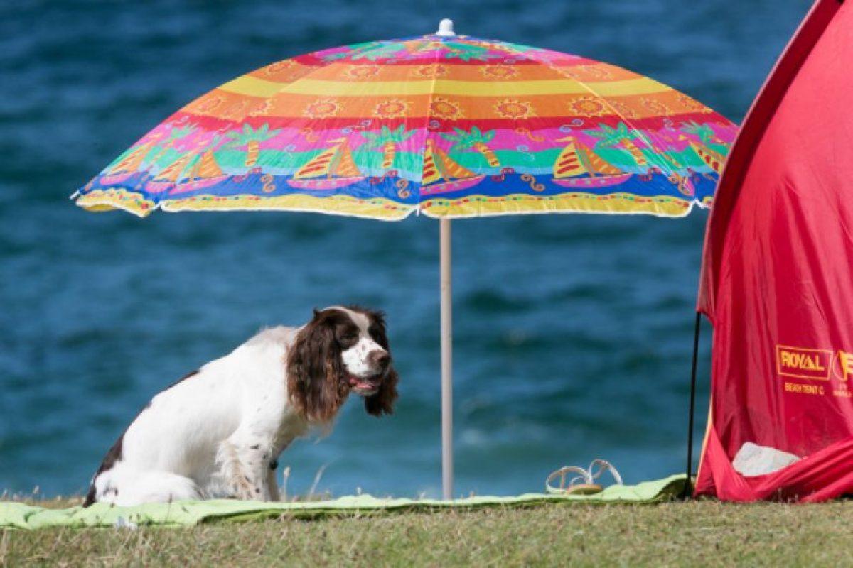 4. Informarse antes de tener una mascota Foto:Getty Images. Imagen Por:
