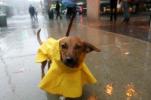 5 formas para contribuir a evitar el maltrato animal Foto:Getty Images. Imagen Por: