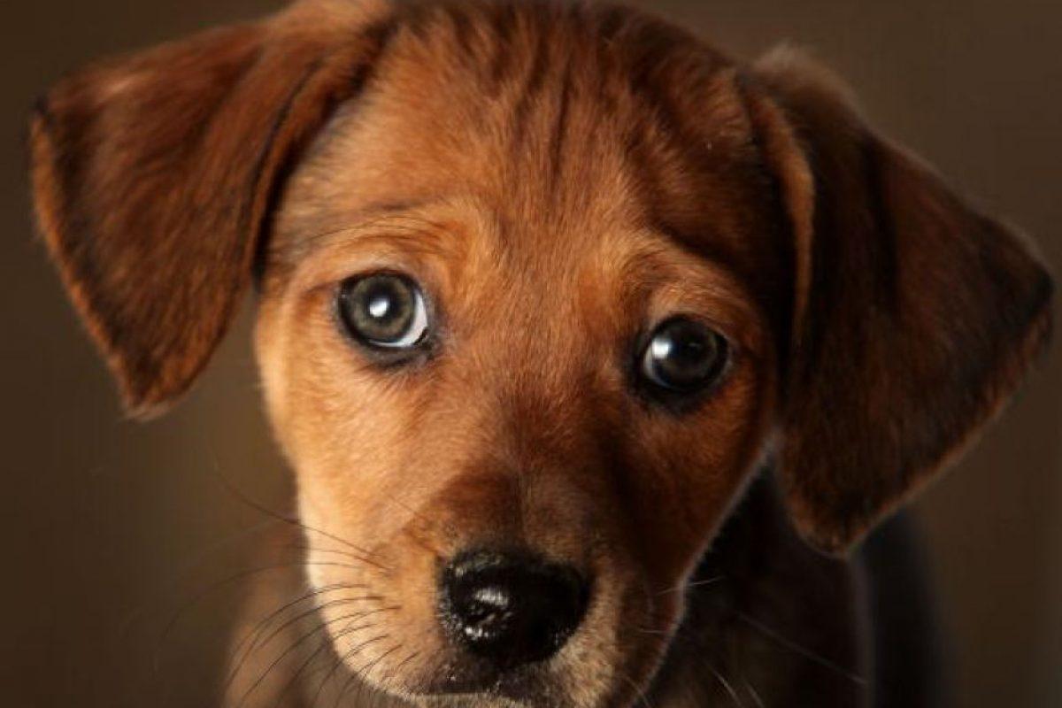 1. Regalar un paseo a un perro de albergue. Existen asociaciones que lo ofrecen. Foto:Getty Images. Imagen Por:
