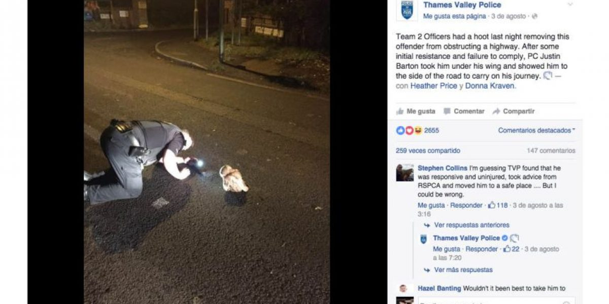 Este rebelde búho estuvo a punto de ser arrestado por la policía