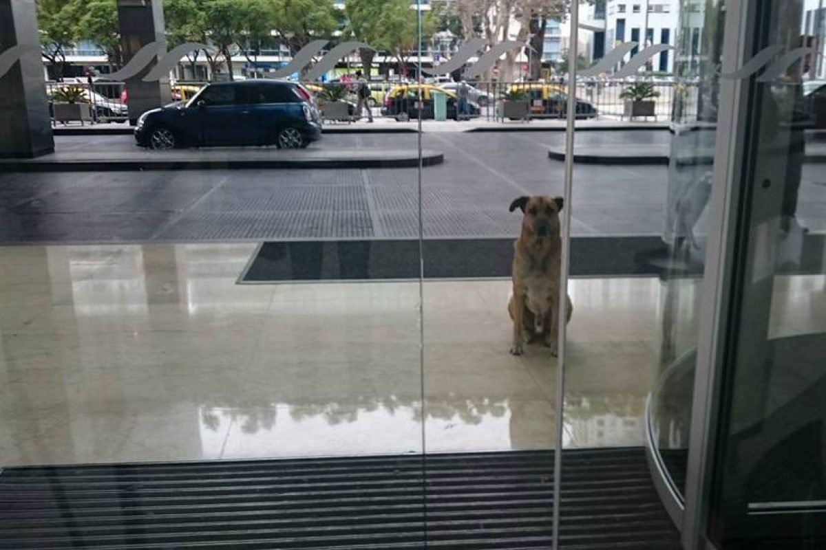 El perro esperaba a la azafata cada día en el hotel Hilton Foto:Facebook: Mascotas Puerto Madero Adopciones Responsables. Imagen Por: