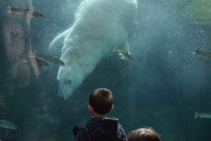 Momentos antes de que Alexander y Aurora se conocieran Foto:Steve Hikida/Solent. Imagen Por: