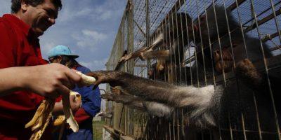 Clan Maluenda abrió parcela para mostrar que sus animales están bien