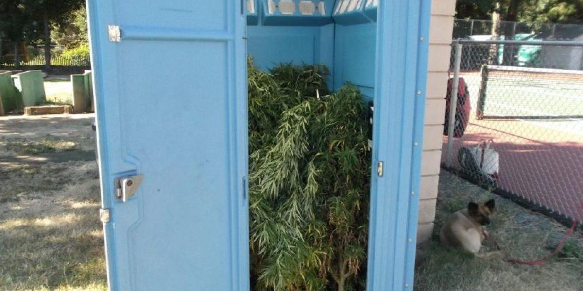 EEUU: baño químico en club de tenis era usado como bodega de marihuana