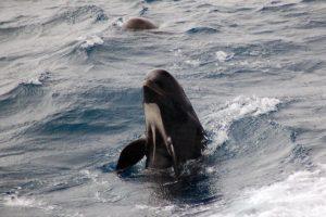 Foto:NOAA. Imagen Por: