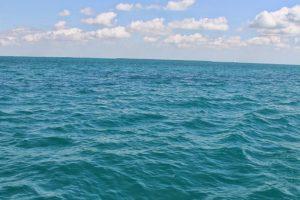 Esto porque se enfrían más rápido si nadan. Foto:LionsGate. Imagen Por: