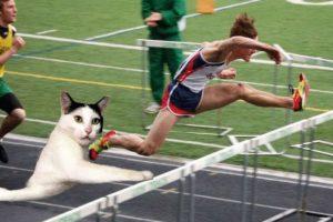 Japón y hasta Rusia están enloqueciendo con este gato. Foto:Twitter. Imagen Por: