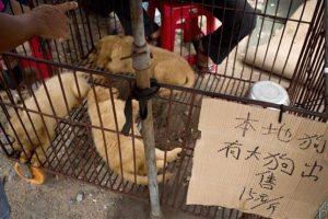Esto recuerda al Festival de Carne de Yulin, en China, una de las tradiciones asiáticas más criticadas en el mundo Foto:AP. Imagen Por: