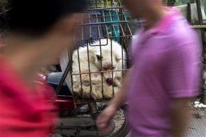 Las personas pueden caminar entre puestos callejeros en los que se vende carne de perro de todo tipo, tanto vivos como muertos Foto:AP. Imagen Por: