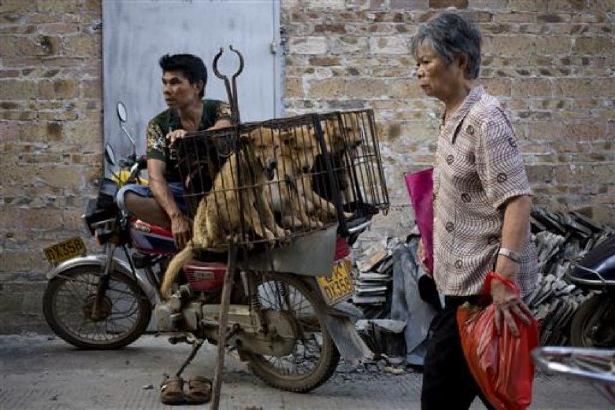 Aquí se sacrifican a más de diez mil canes con fines gastronómicos Foto:AP. Imagen Por: