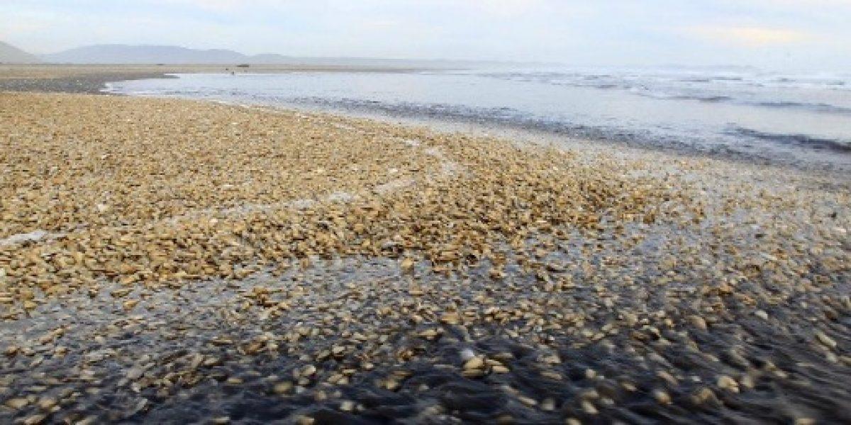 Comisión científica descarta relación entre la marea roja y el vertimiento de salmones