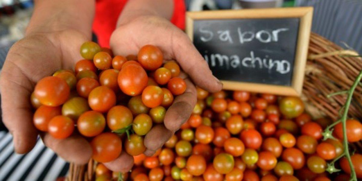 Aceitunas y tomates son los principales productos agrícolas de Arica y Parinacota