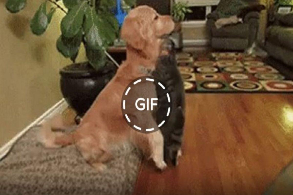 Los GIFs son muy populares hoy en día. Foto:Facebook. Imagen Por: