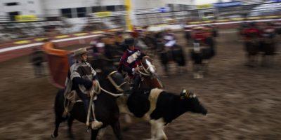 Alcaldes llaman a defender el rodeo tras decisión de Recoleta y Nuñoa de prohibirlo