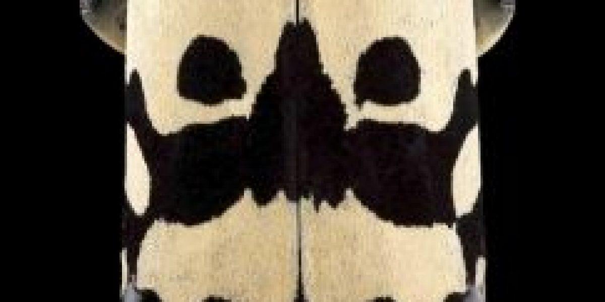 Fotos: ¿Pueden ver los insectos dentro de estas máscaras?