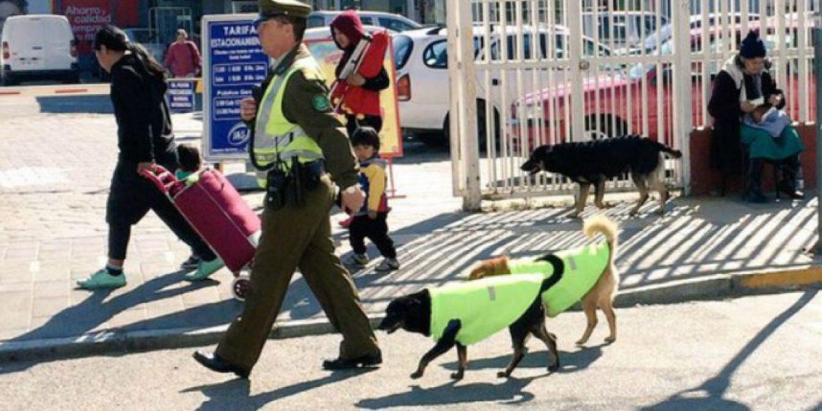 Carabineros de Quilpué adoptan perros callejeros y los incluyen en sus patrullajes