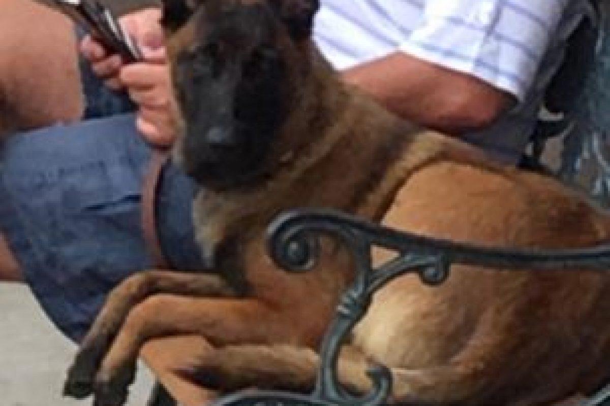 """""""Rylee"""", la perrita protagonista de la historia Foto:Facebook: Lost Dog Search Team. Imagen Por:"""