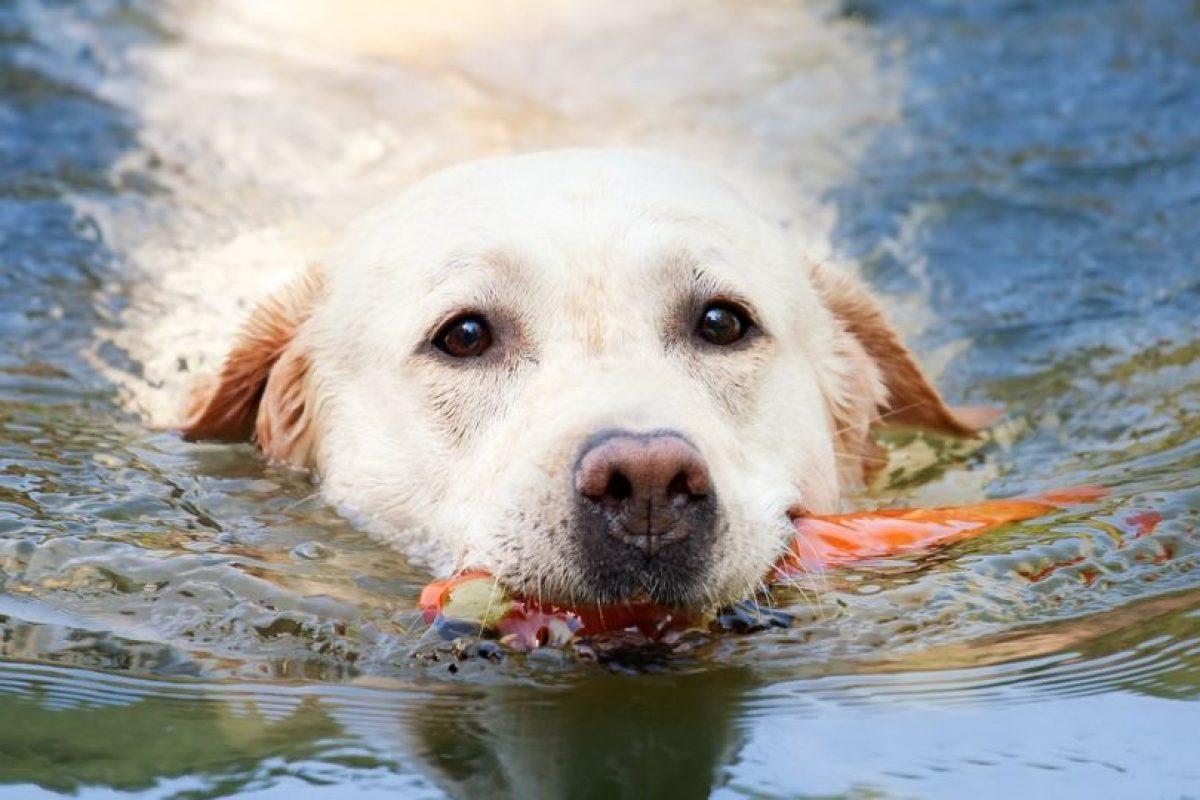 Hay algunos que por naturaleza son mejores nadadores. Foto:Pixabay. Imagen Por:
