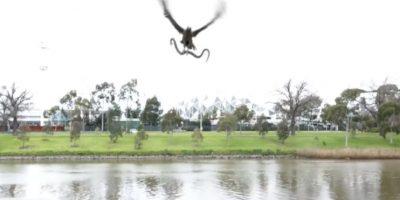 Video: halcón deja caer una serpiente sobre una parrillada familiar
