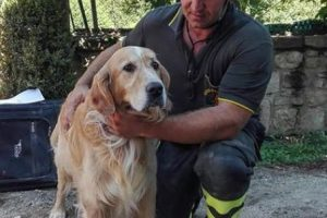 Romeo, el golden retriever rescatado Foto:AP. Imagen Por: