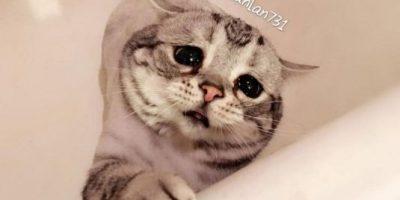 """Conozcan a la gatita """"más triste del mundo"""" que conquistó Internet"""