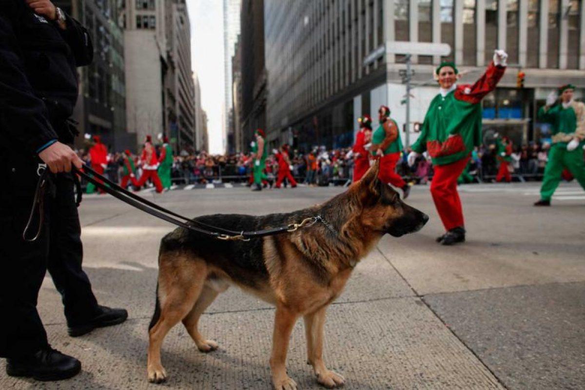 No fue sino hasta la Primera Guerra Mundial que países como Bélgica y Alemania formalizaron el proceso de formación y comenzaron a usar perros para tareas específicas, como la guardia. Foto:Getty Images. Imagen Por: