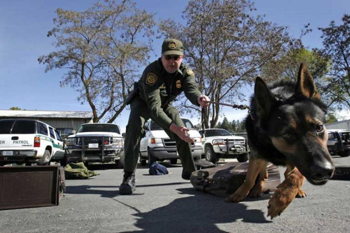 Las fuerzas de policía en las ciudades más importantes del mundo utilizan perros para rastrear criminales. Foto:Getty Images. Imagen Por: