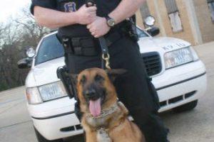 La mayoría de los perros policía son machos, sin castrar para que mantengan su agresividad natural. Foto:Getty Images. Imagen Por: