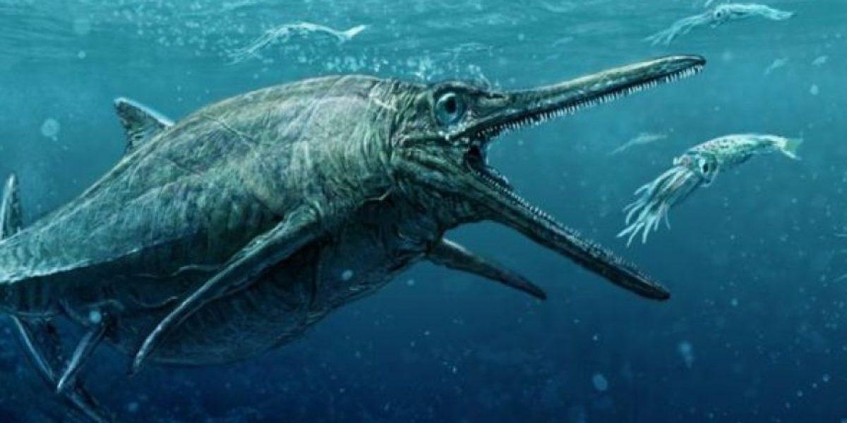Revelan en Escocia un impactante monstruo marino