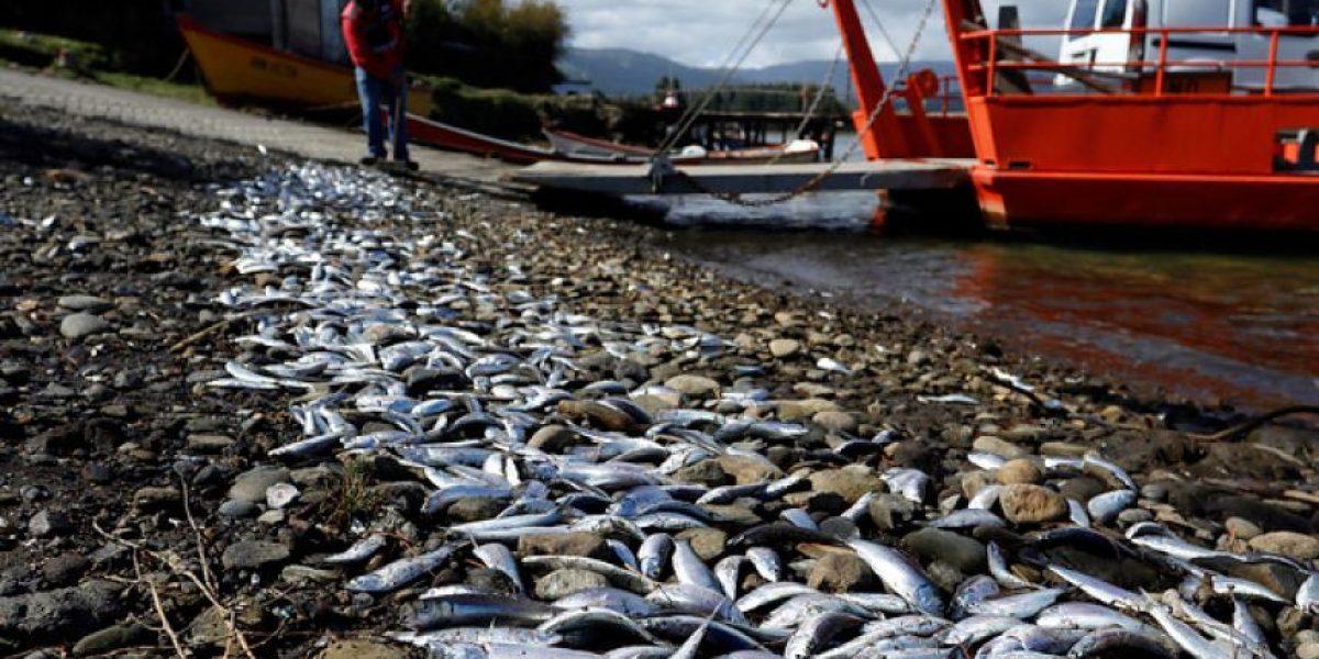 Estudio de Greenpeace culpa a las autoridades por marea roja que afectó a Chiloé