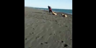 Inician campaña para identificar al autor de brutal ataque a perro en San Pedro de La Paz