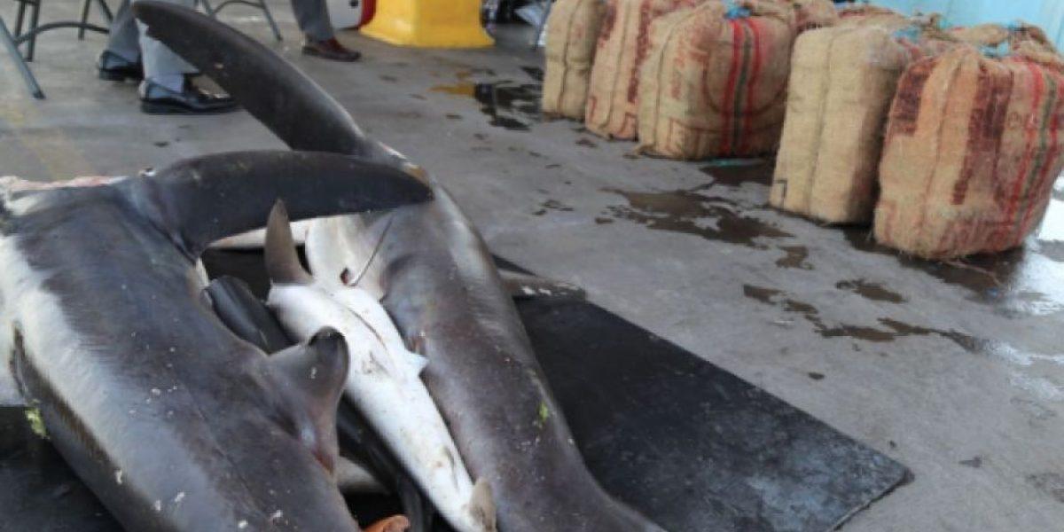 Traficaban 200 kilos de cocaína en carne de tiburón