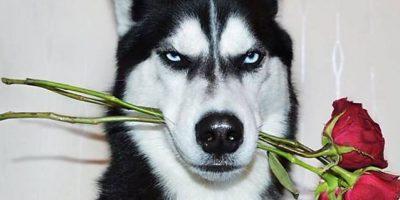 La increíble historia de la joven que paga la universidad gracias a las fotos de su malhumorado perro