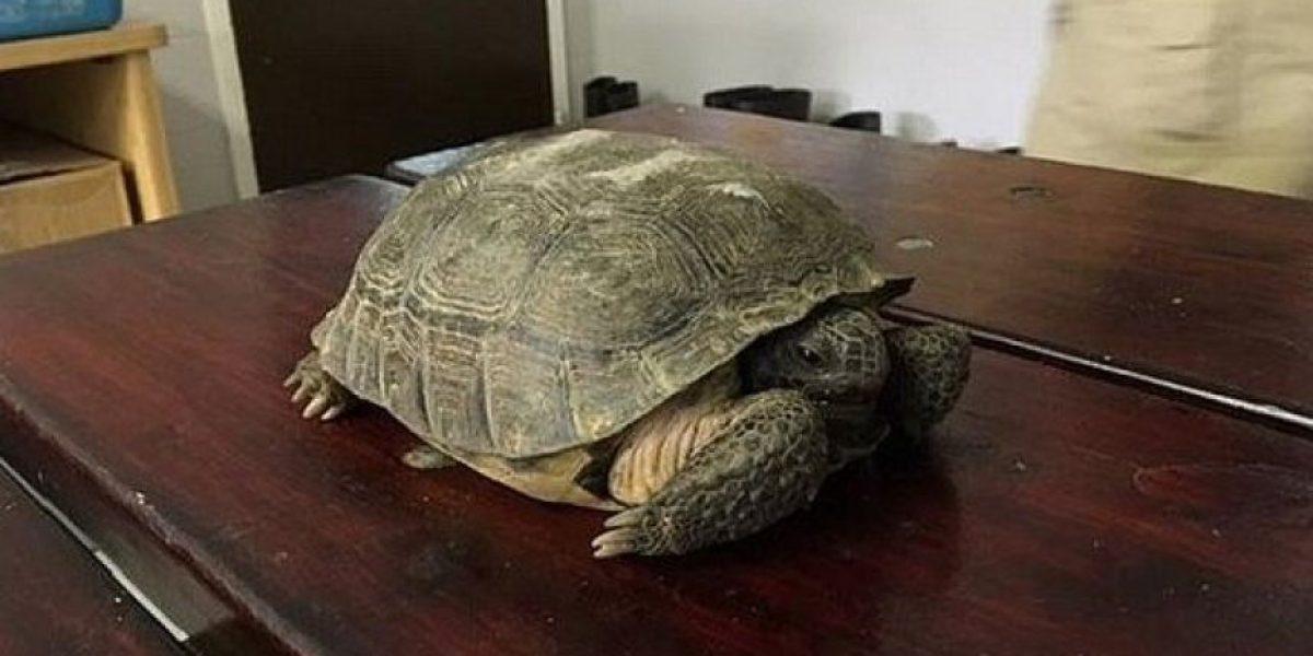 Arrestan a sujeto que prendió fuego a tortuga durante una transmisión en vivo por Facebook