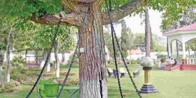 La historia del árbol que fue arrestado y lleva 118 años detenido