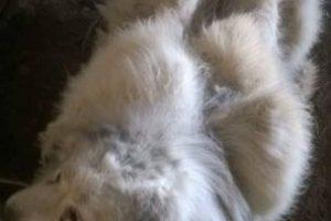 La agrupación publicó imágenes del después del animal, tras pasar por un radical corte de pelo, en el que participaron siete personas. Foto:Reproducción Facebook. Imagen Por: