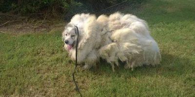 La historia del perro que estuvo seis años encerrado y se transformó en una bola de pelos