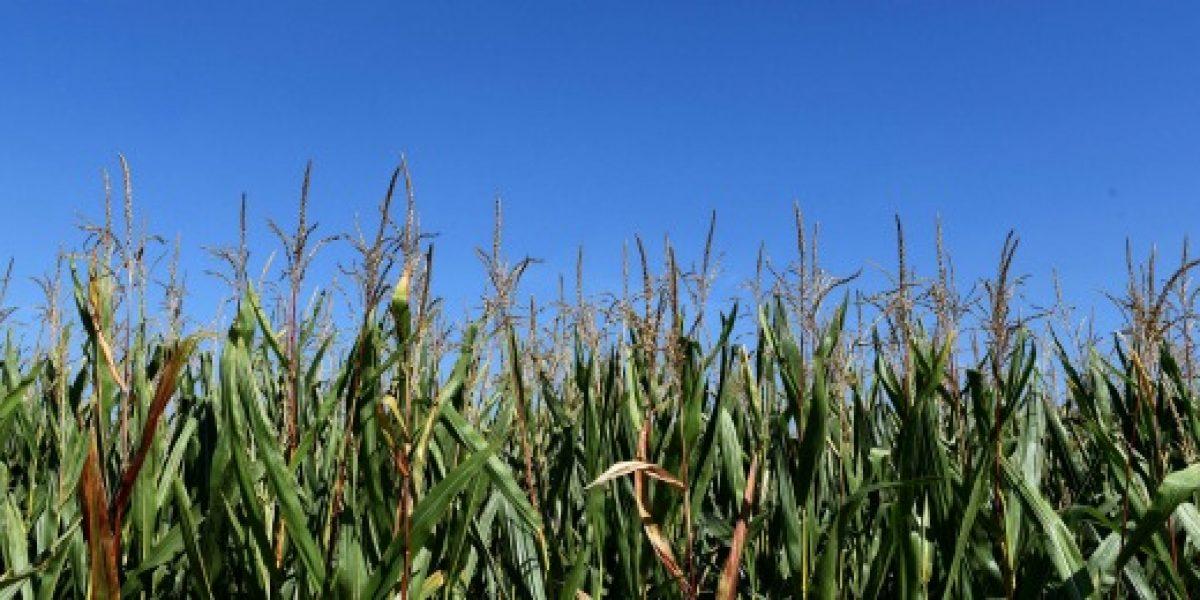 La polémica compañía Monsanto, ¿qué hace y qué vende?