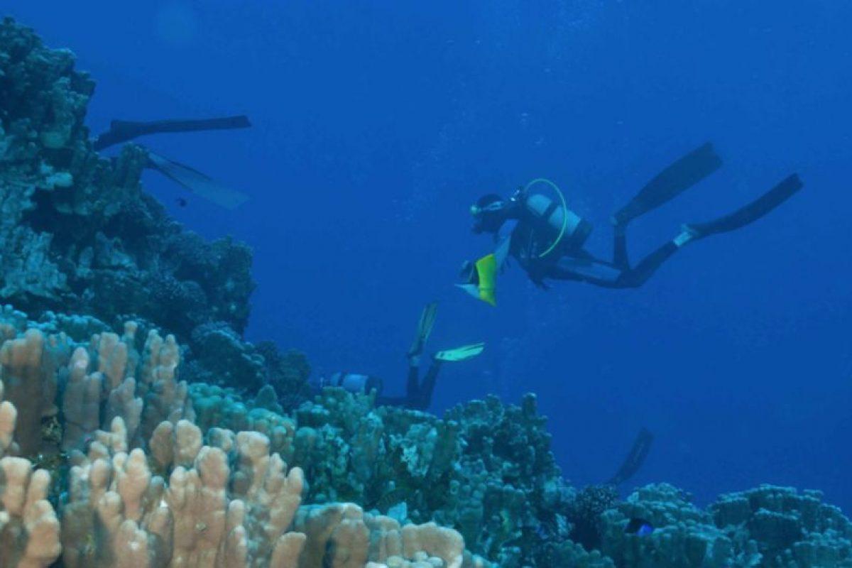 """Para concretar la """"zona protegida"""", restaría hacer una consulta ciudadana a la comunidad Rapa Nui. Esta consulta está agendada para el 6 de noviembre. Foto:Gentileza de outdoors.cl. Imagen Por:"""