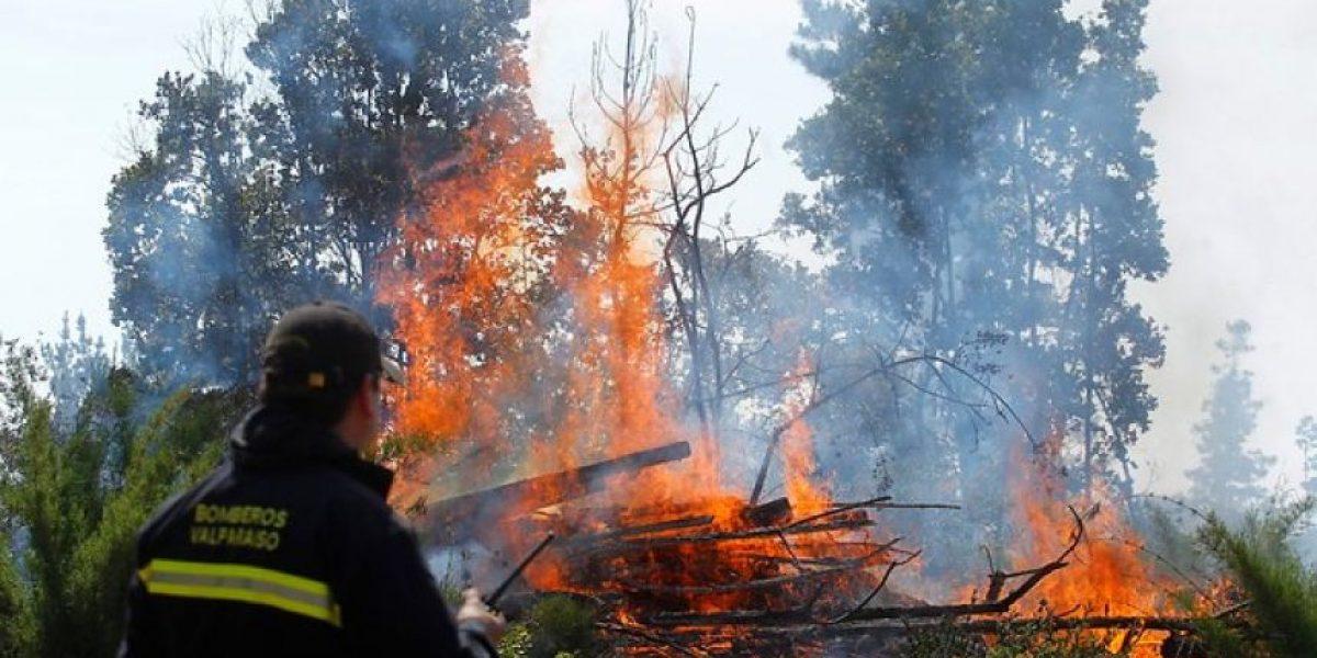 Alerta roja en Región de Valparaíso por incendio forestal en Placilla